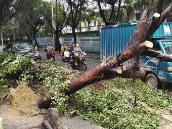 22日凌晨邕城狂风起大雨下 多个路段树木倒伏(图)