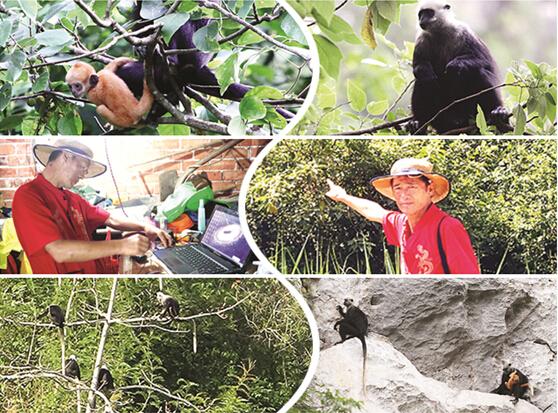 高清:东北男子崇左观猴 9年没收入住山洞拍纪录片