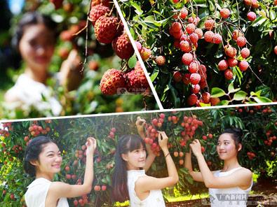 [高清]新媒体大咖与钦州灵山荔枝节相约在夏日