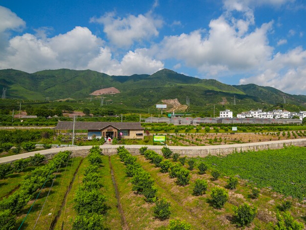 """贺街镇新兴寨:""""百年菜乡""""的现代农业发展路"""
