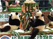 大熊猫三胞胎过两周岁生日