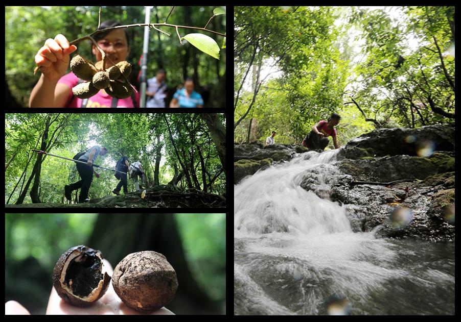 高清:柳州融安发现生态体系完整的原始森林