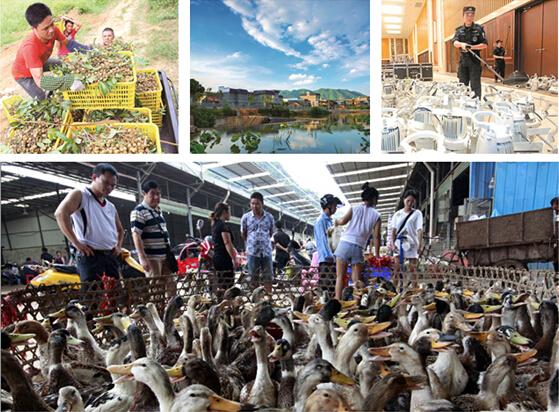 8月16日焦点:中元节鸭子销售火爆 代宰服务价15元