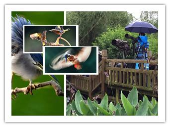 """柳州""""鸟叔""""千里追鸟摄影不忘保护生态"""