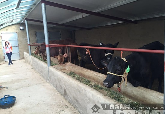 胡泽方)8月30日,第十二届全国网络媒体宁夏行采访团来到泾源县大湾乡