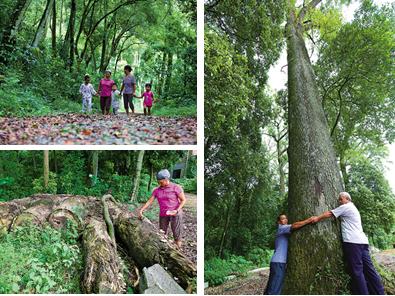 高清:百年古树的生态之歌