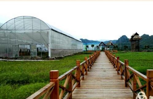 观宝岛美人椒现代农业园