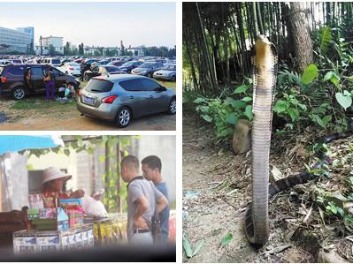 10月10日焦点图:南宁狮山公园有毒蛇出没?