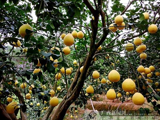 黄钟初摄影:丰收的季节