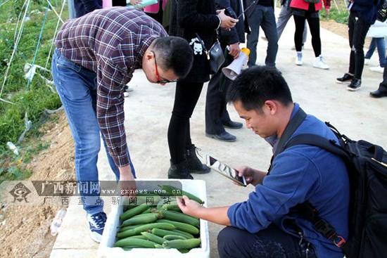 """大化:发展""""汁用丝瓜""""产业 引领农户脱贫致富"""