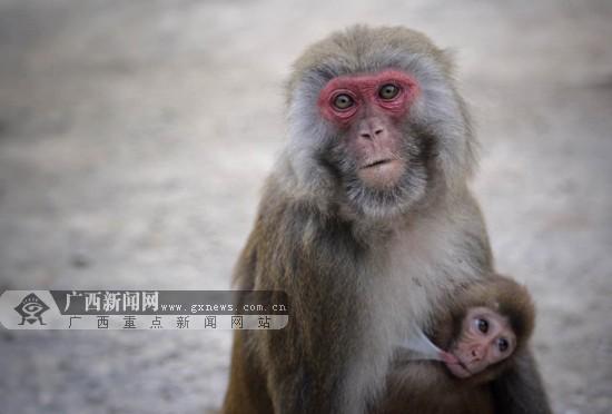 凤山生态景观禀赋独特 巴腊猴山奇趣成祥