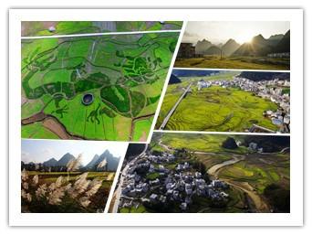 高清组图:广西乐业县五万亩油菜花开盛似画卷
