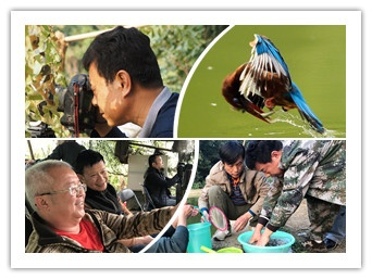 雀山:工业之城的鸟类乐园