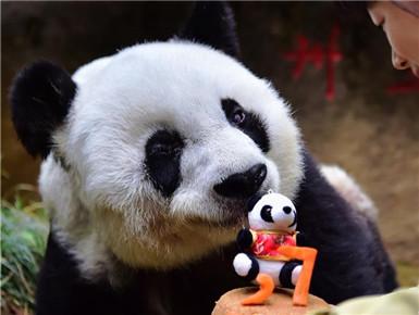 寿星大熊猫:我37岁啦