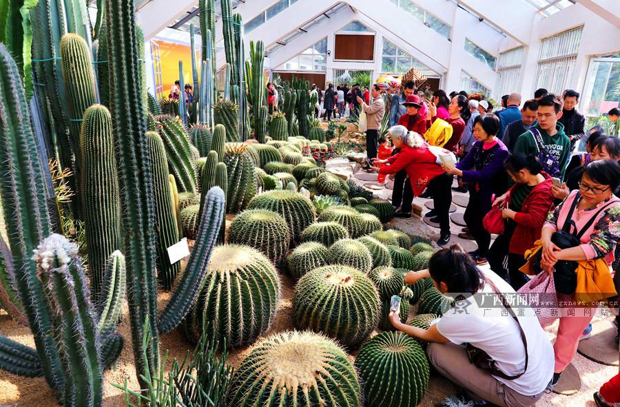 南宁市沙漠植物园经过修整 春节开始免费对外开放