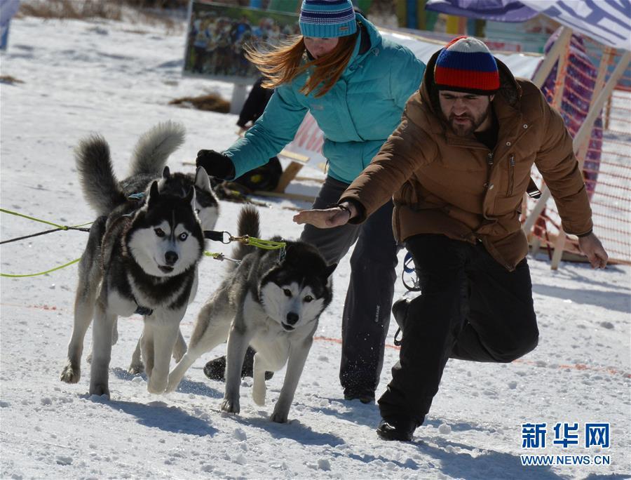 [11](外代二线)俄罗斯滨海边疆区举行狗拉雪橇比赛
