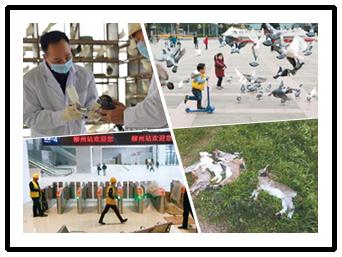 2月25日焦点图:南宁活禽市场轮流休市消毒