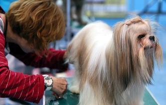 香港宠物节举行宠物美容大赛