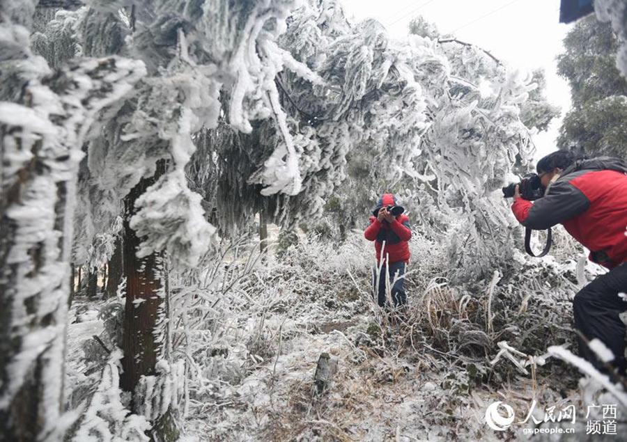 广西:天湖冰雪美景醉游人(组图)