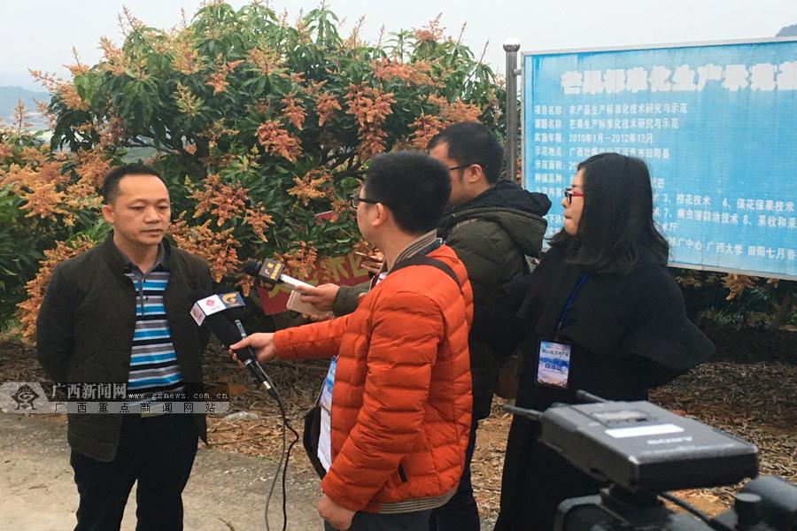 """【脱贫攻坚看广西】田阳尚兴村:芒果地里巧念""""扶贫经"""""""