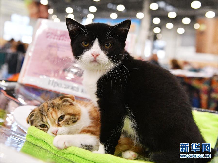 [10](外代二线)莫斯科国际宠物猫展
