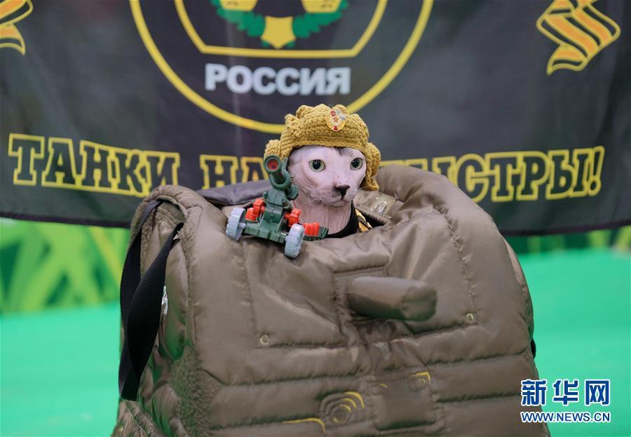 [16](外代二线)莫斯科国际宠物猫展