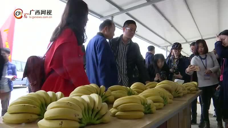 【脱贫攻坚看广西】田东县林逢镇:扶贫引导基金助力产业扶贫