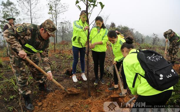 植树节前 防城400志愿者栽2780棵树