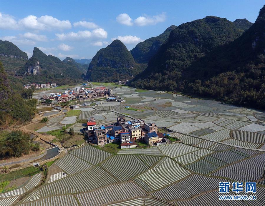 春耕时节,广西河池市罗城仫佬族自治县的农民抢抓农时,起垄耕种.