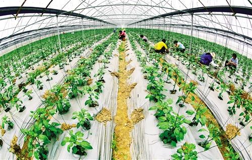 促进产业融合发展 壮大农村新产业新业态