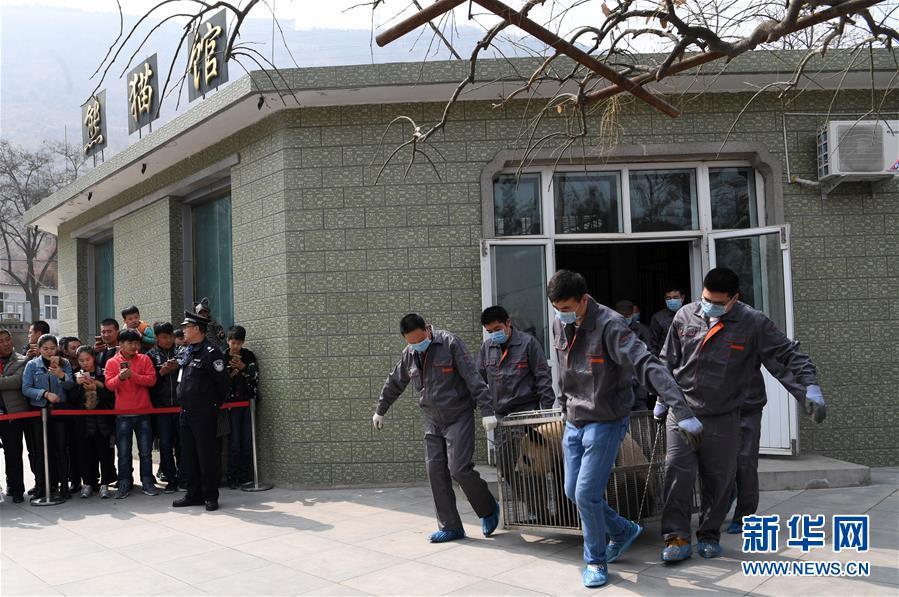 """(社会)(1)大熊猫""""蜀兰""""告别兰州"""