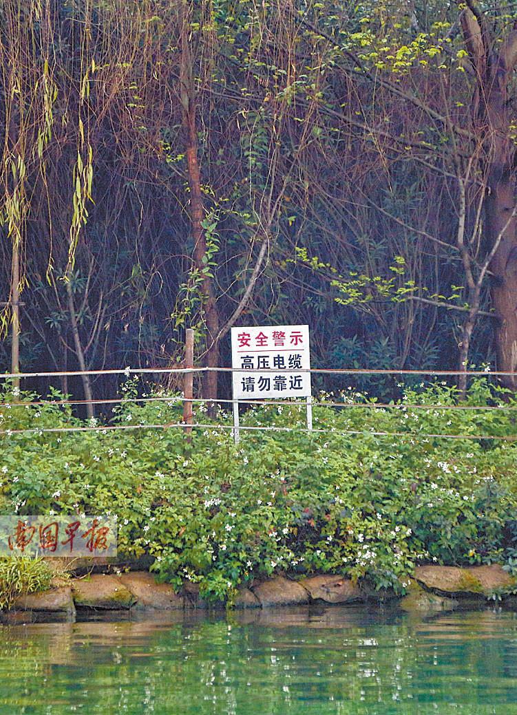 柳州萝卜洲:城市江中有秘境 人迹罕至鸟成群(图)