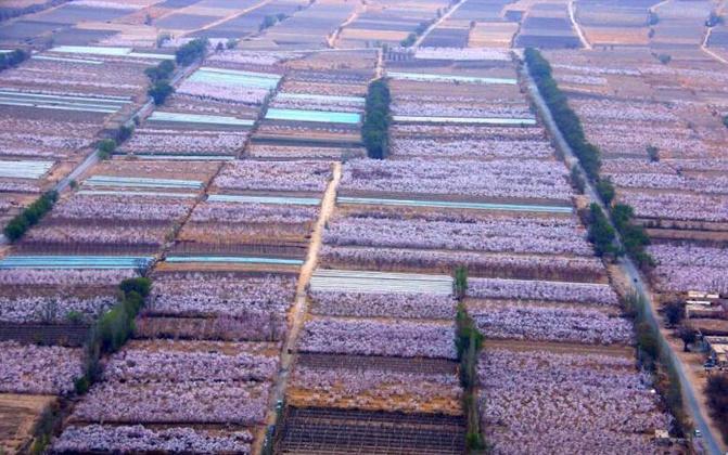 俯瞰新疆托克逊县万亩杏园