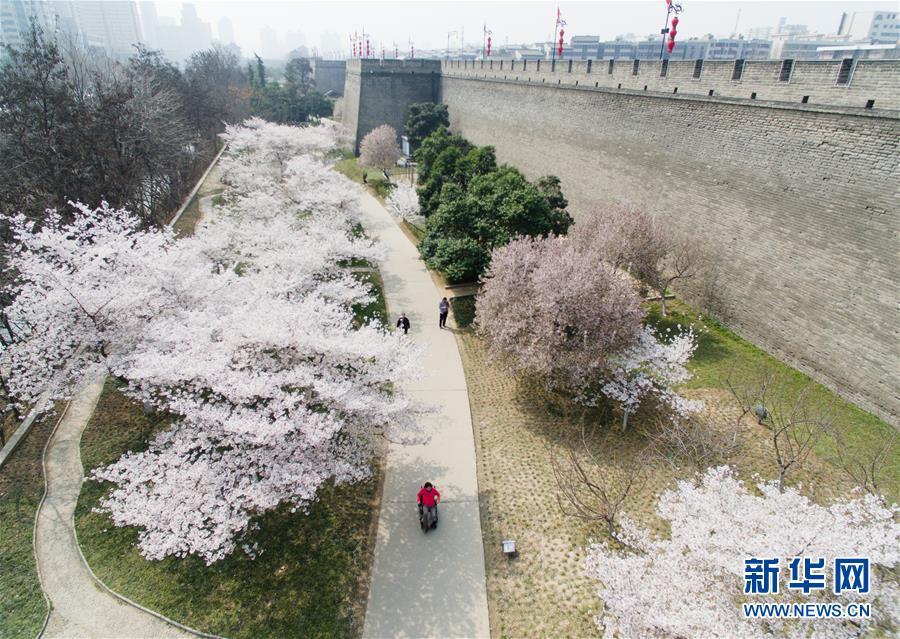古城西安:花红柳绿又一春