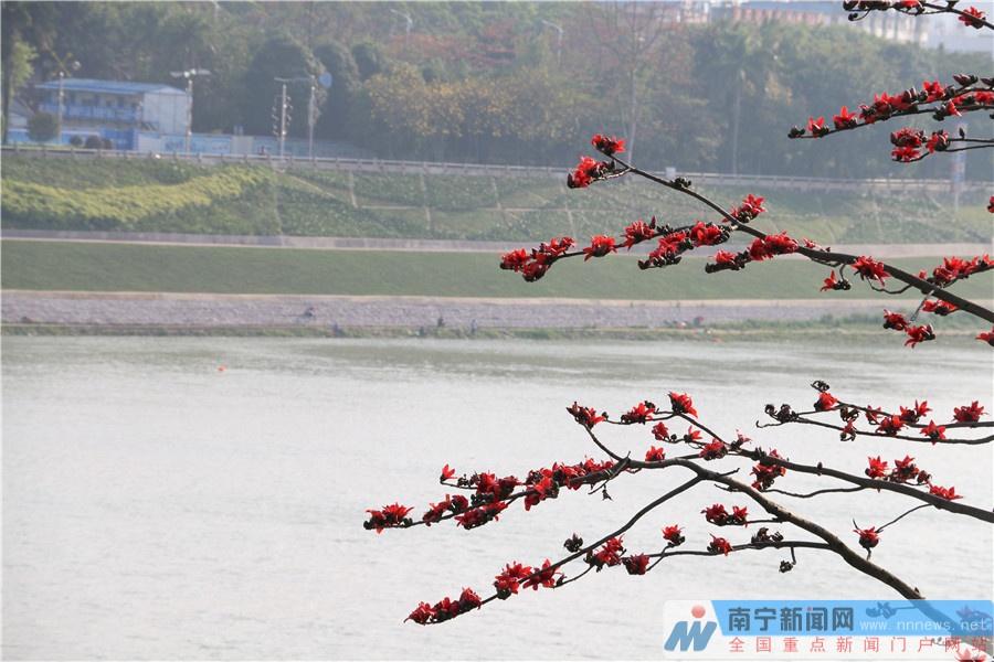 高清组图:南宁天气放晴 鲜花盛开春意盎然