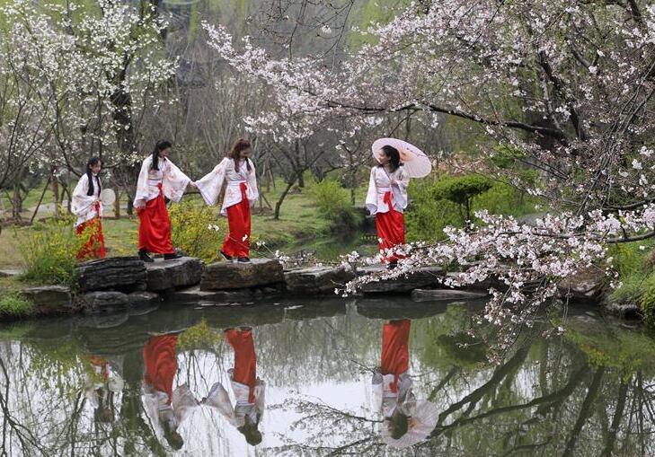 樱花树下汉服秀