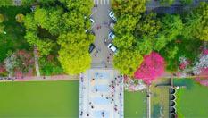 """三峡大学""""桃花朵朵开""""游人如织"""