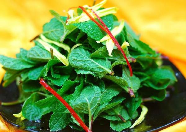 野菜并不等于绿色食品 注意这样的野菜有剧毒