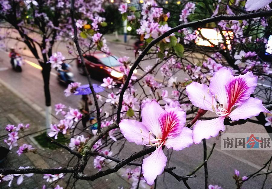 春意挂上树梢阅读