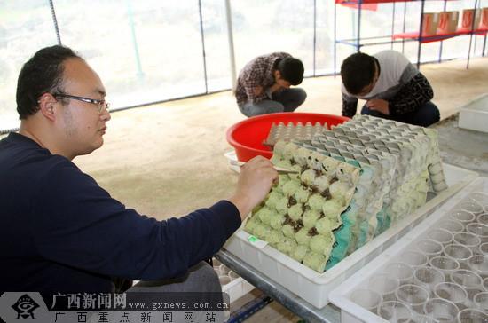 河池大化弄京村养殖毒蝎子 铺就脱贫致富路(组图)
