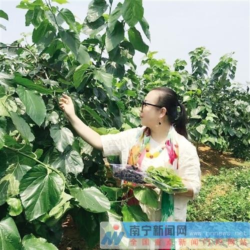 """【治国理政新实践?广西篇】广西水果产量高于全国 小桑树""""长""""出千亿元产业"""
