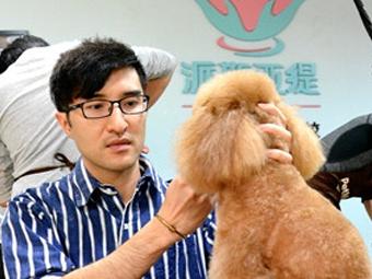 初探南宁宠物美容师行业 导师级年薪可达百万(图)