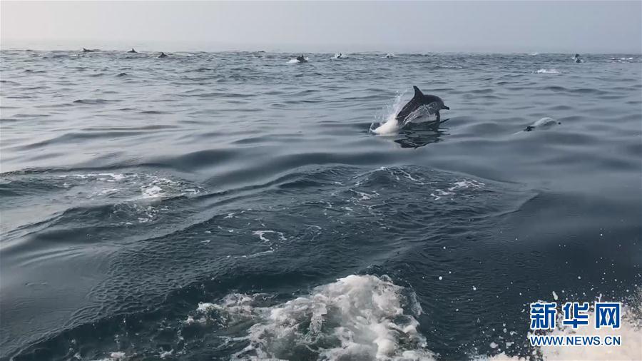 """(环境)(1)南澳岛海域上演""""海豚竞速"""""""