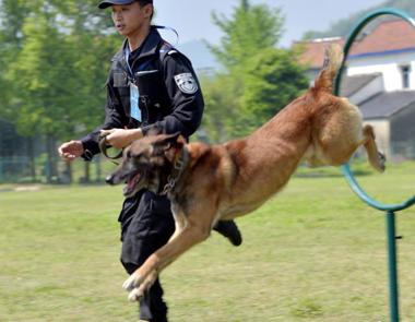 浙江:警犬技术大比武
