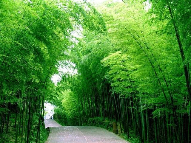桃花江竹海风景区是江南地区最大的竹林生态景区.