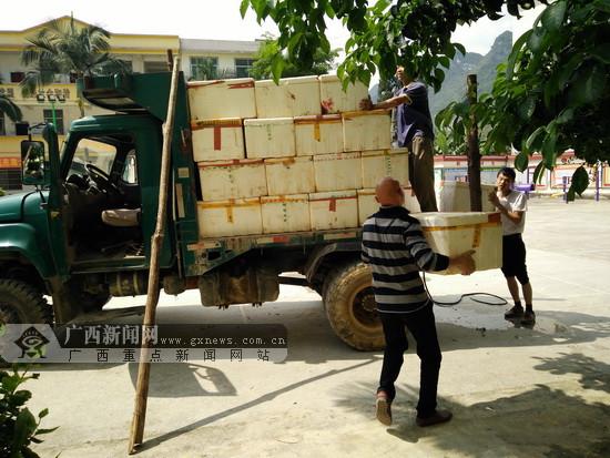百马乡发展两性花毛葡萄产业 加快精准脱贫步法
