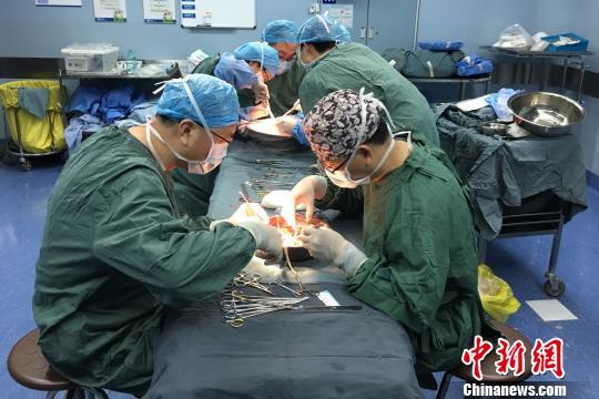 移植手术顺利进行中。浙医二院提供