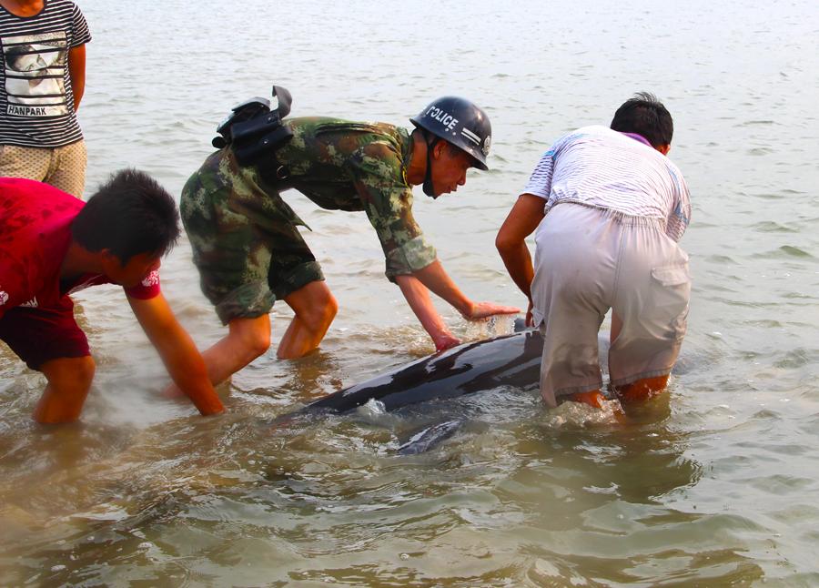高清:受伤海豚搁浅获救 顺利回归大海