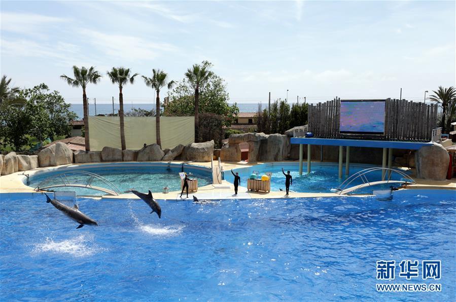 5月10日,在法国昂蒂布的马林兰动物园,海豚在进行表演. 新华社/路透