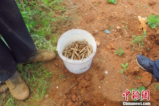 居民挖菜时挖出一箱步枪子弹 王鹏 摄